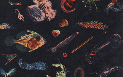 Esce oggi il nuovo album di Alessandro Fiori